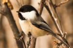 Dzikie ptaki