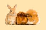 Gryzonie i króliki