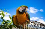 Papugi duże i ptaki egzotyczne